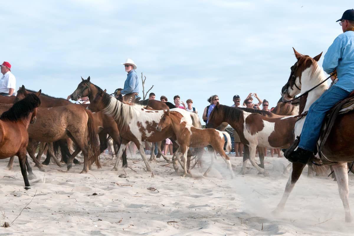 chincoteague island ponies cowgirl magazine