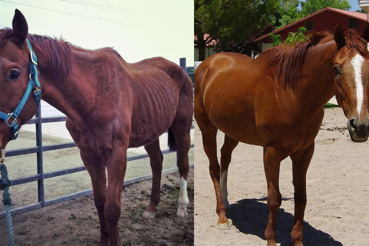 horse transformation cowgirl magazine