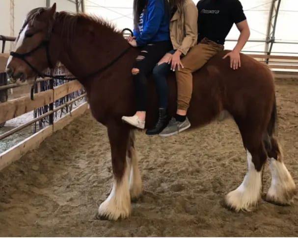 heber valley horse sales