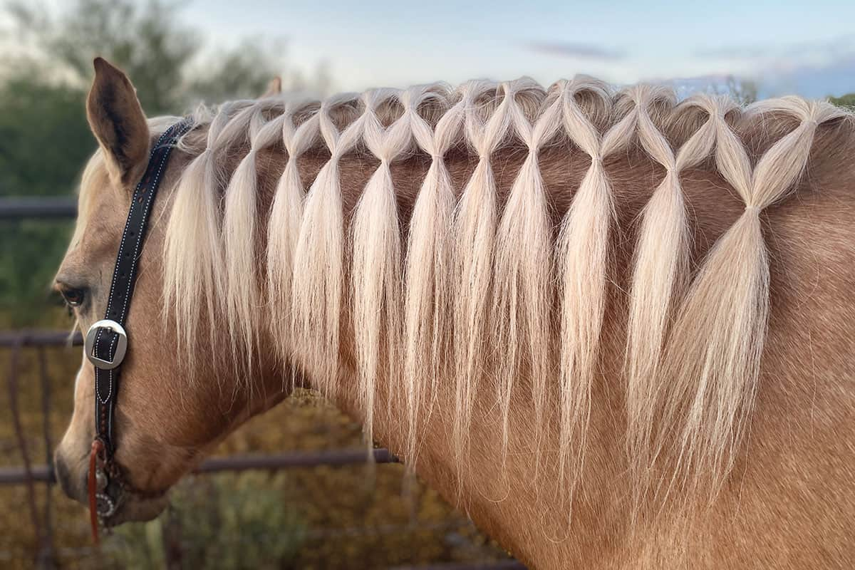 A Gorgeous Summer Horse Hairstyle To Try This Weekend Cowgirl Magazine