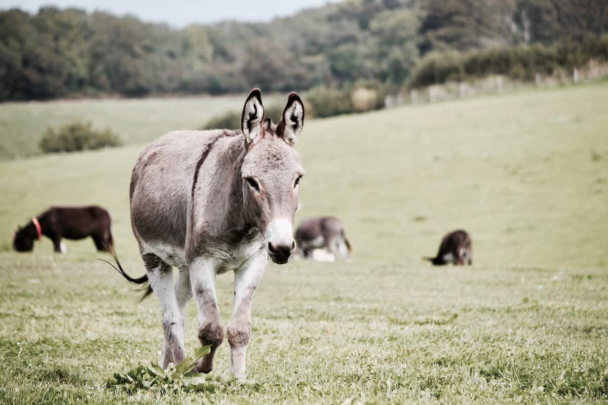 donkey cowgirl magazine