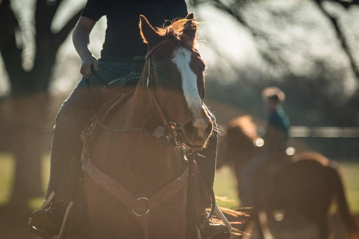 rollback cowgirl magazine