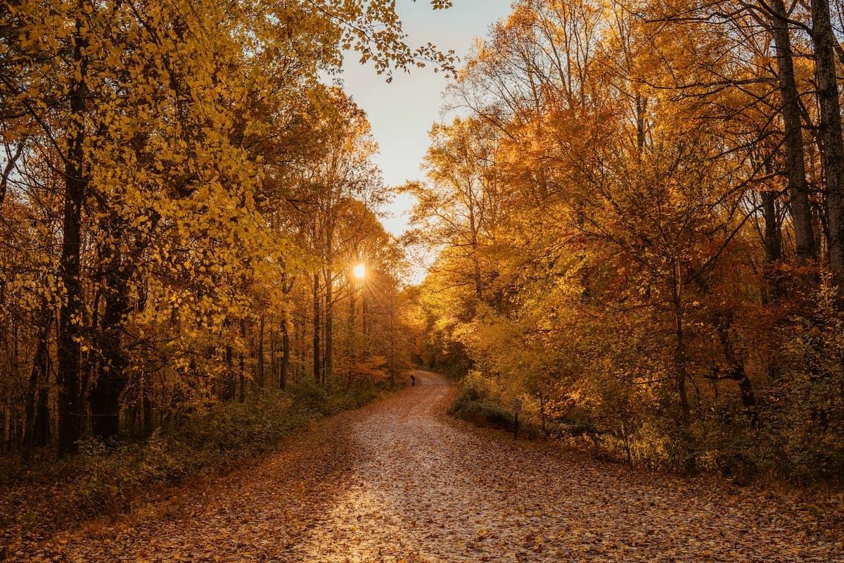 autumn leaves cowgirl magazine