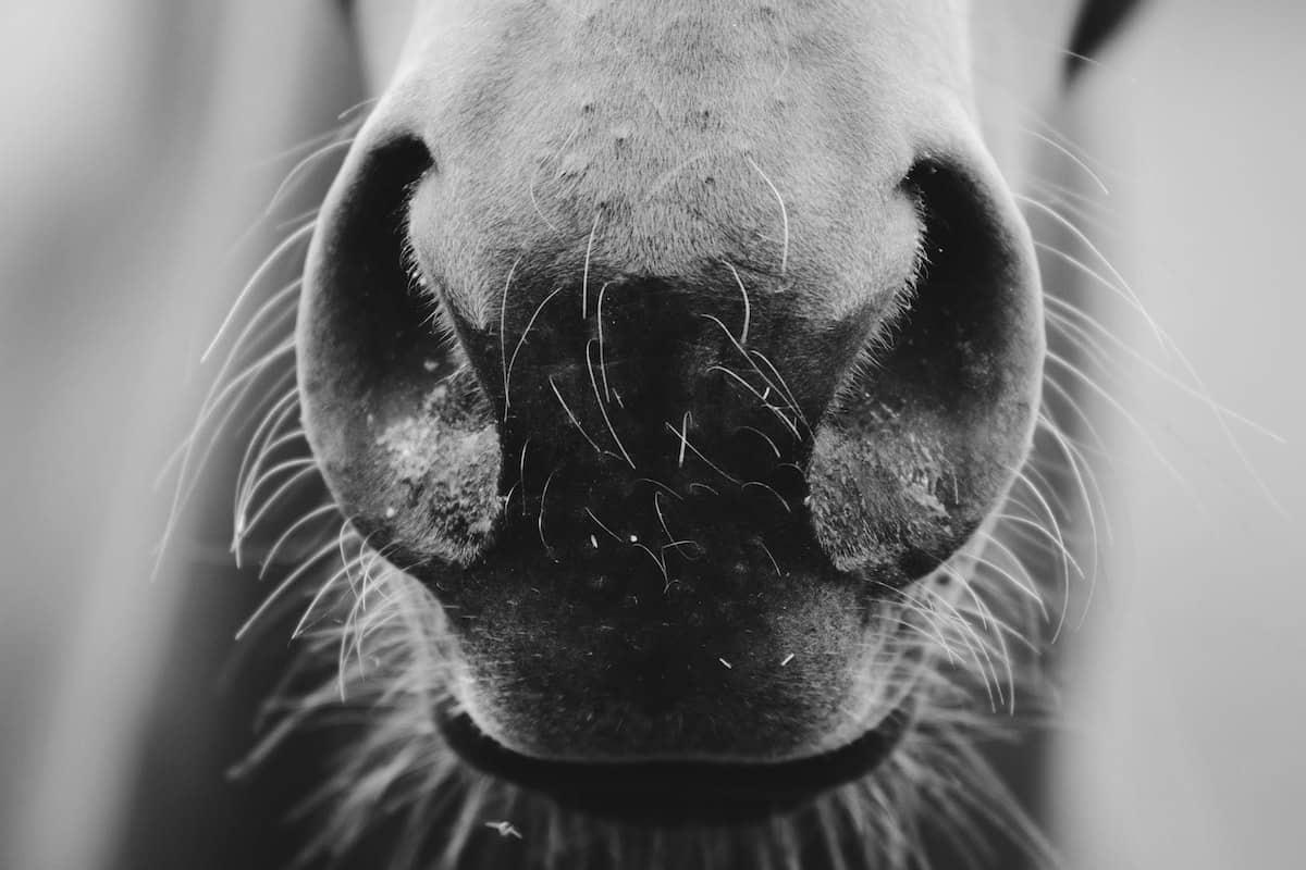 equine flu cowgirl magazine
