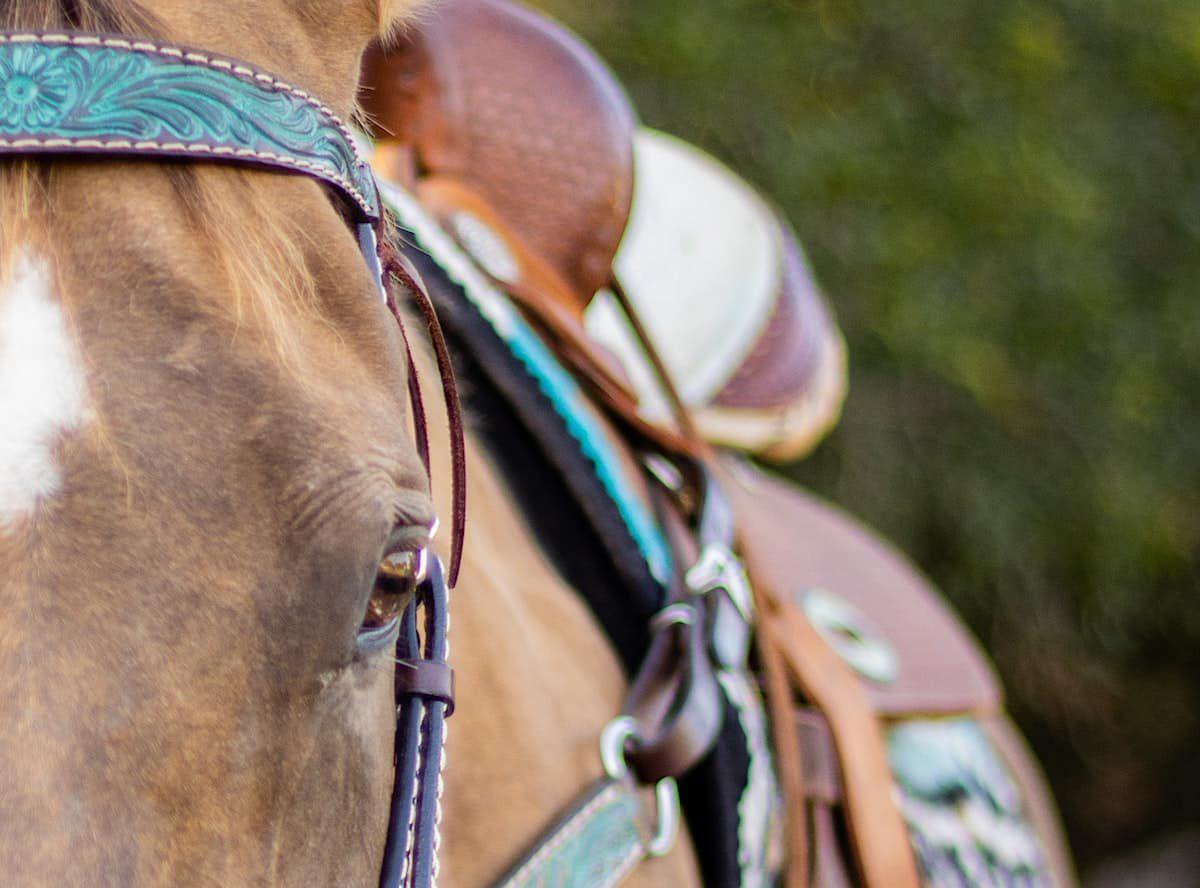 college cowgirl magazine