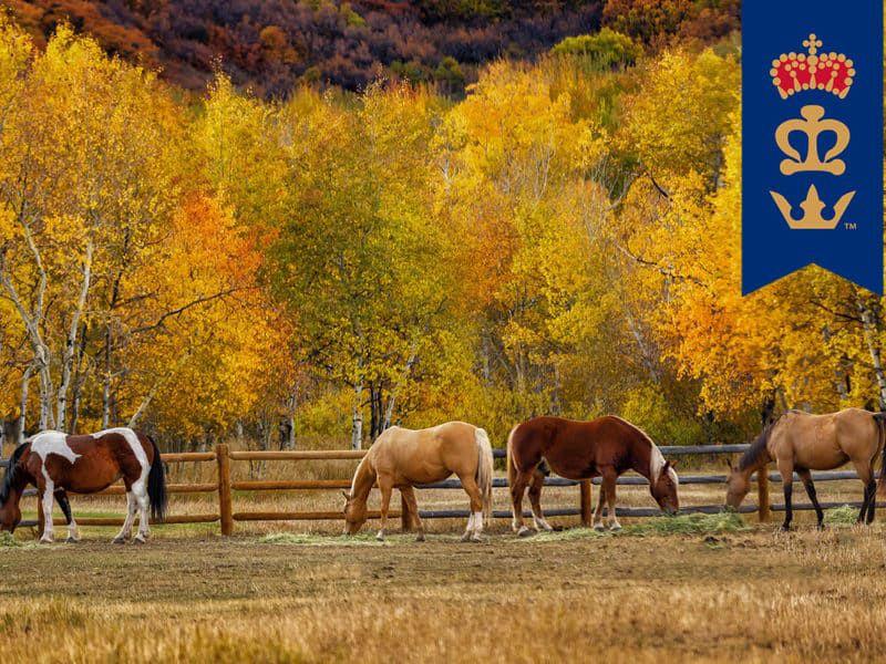 triple crown feed senior horse cowgirl magazine