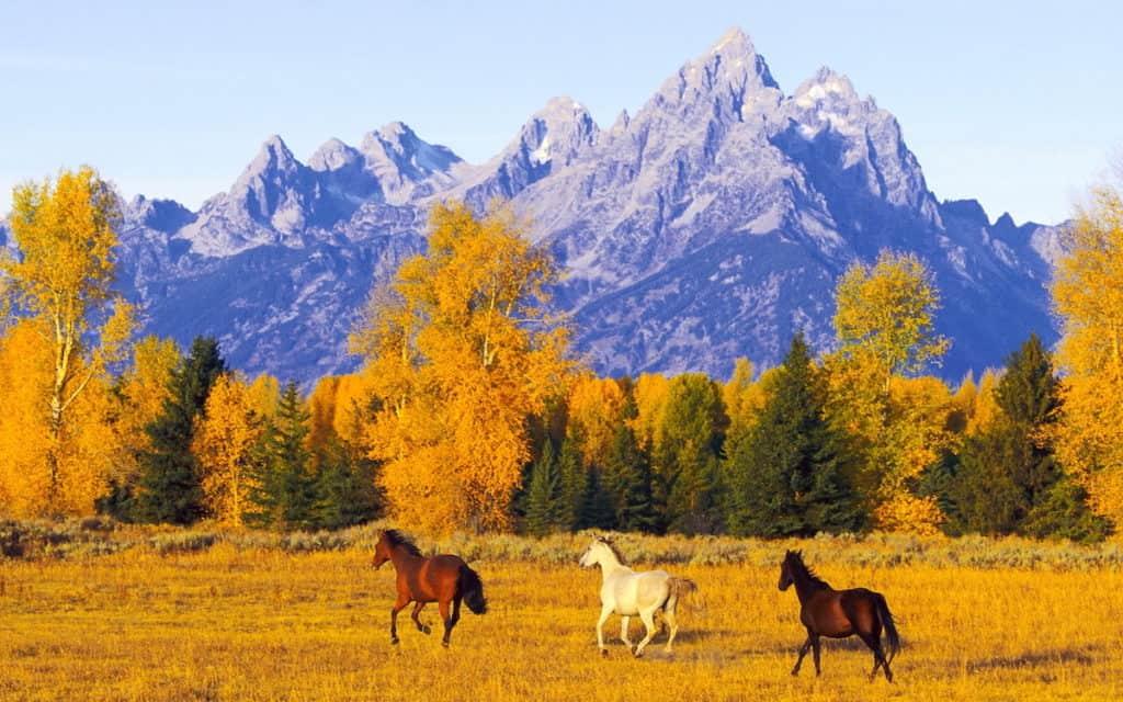 mountains cowgirl magazine