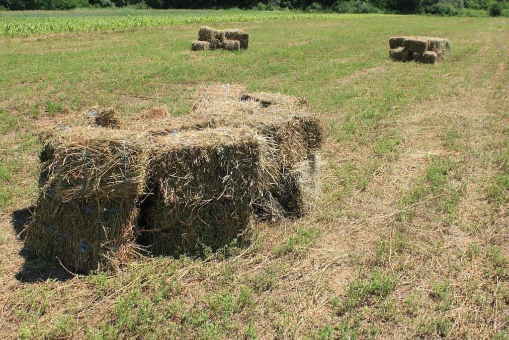 bales cowgirl magazine