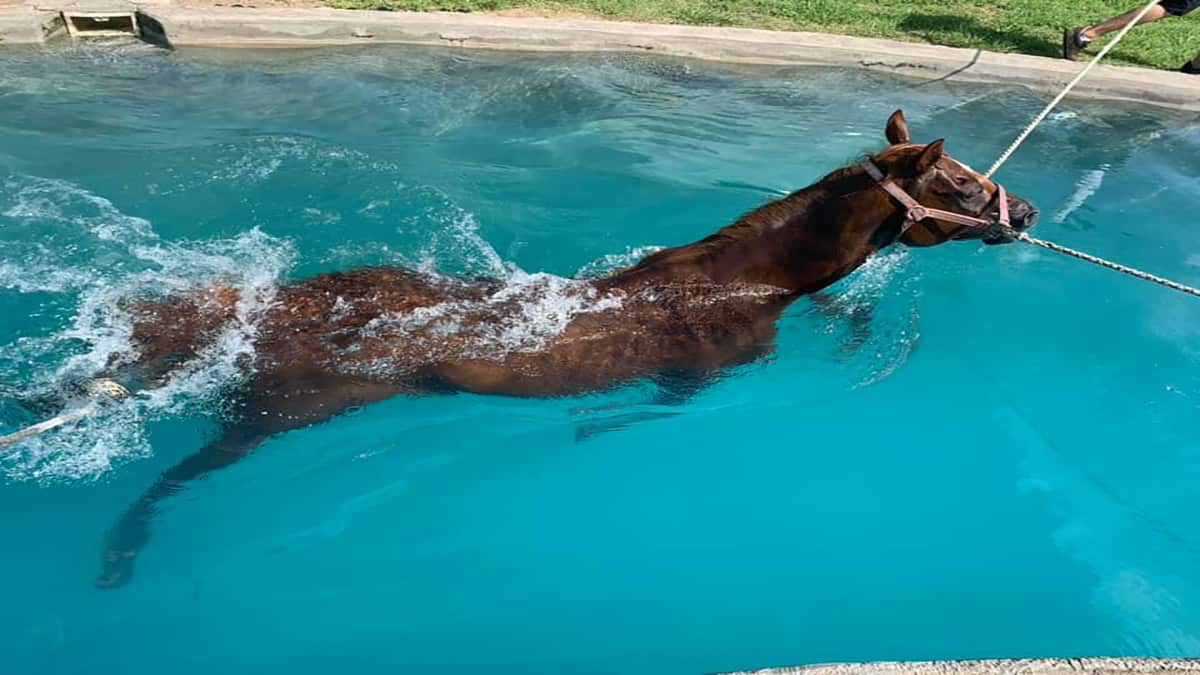 Swimming horse - Horse Swimming - Swimming - Cowgirl Magazine - Horse Helalth