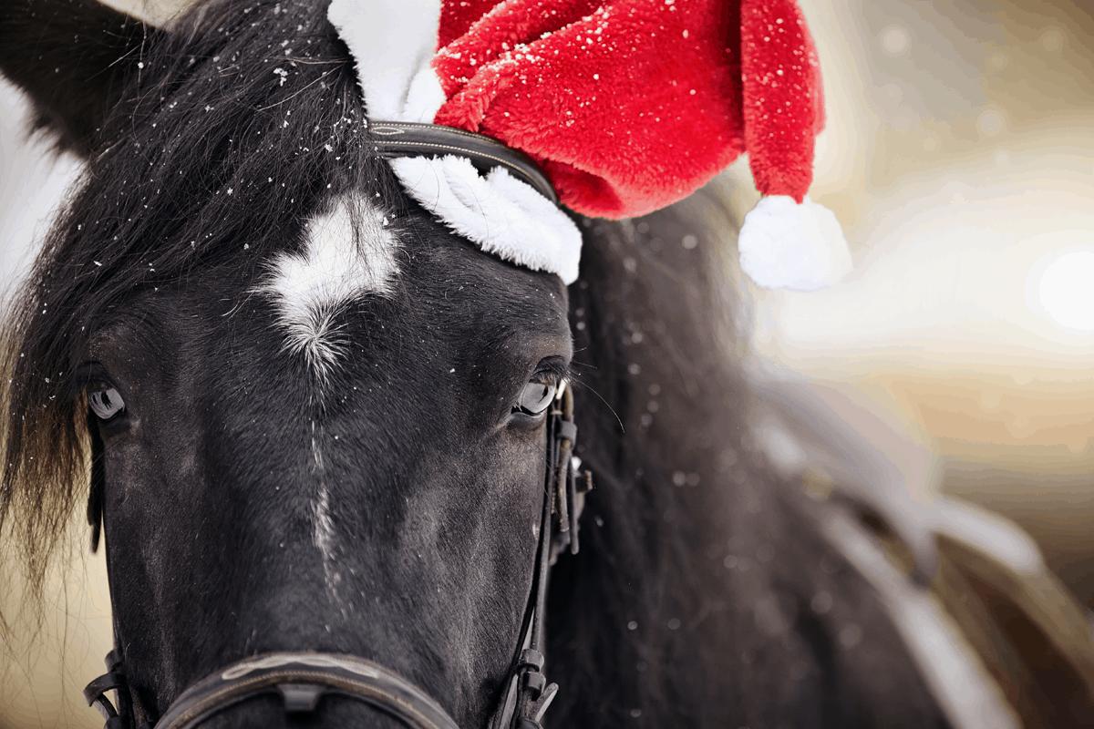 gift horse cowgirl magazine