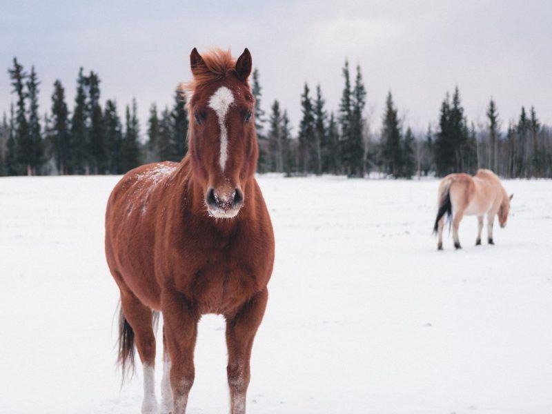 winter activities cowgirl magazine
