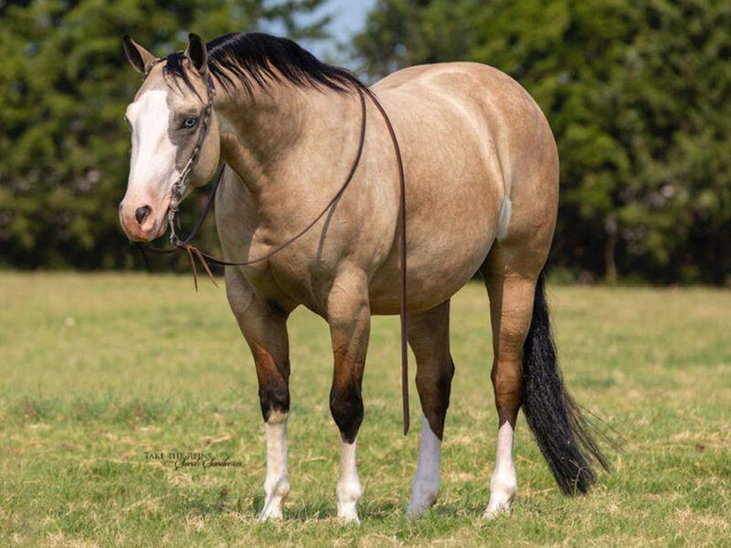 cowgirl cadillacs horse sale