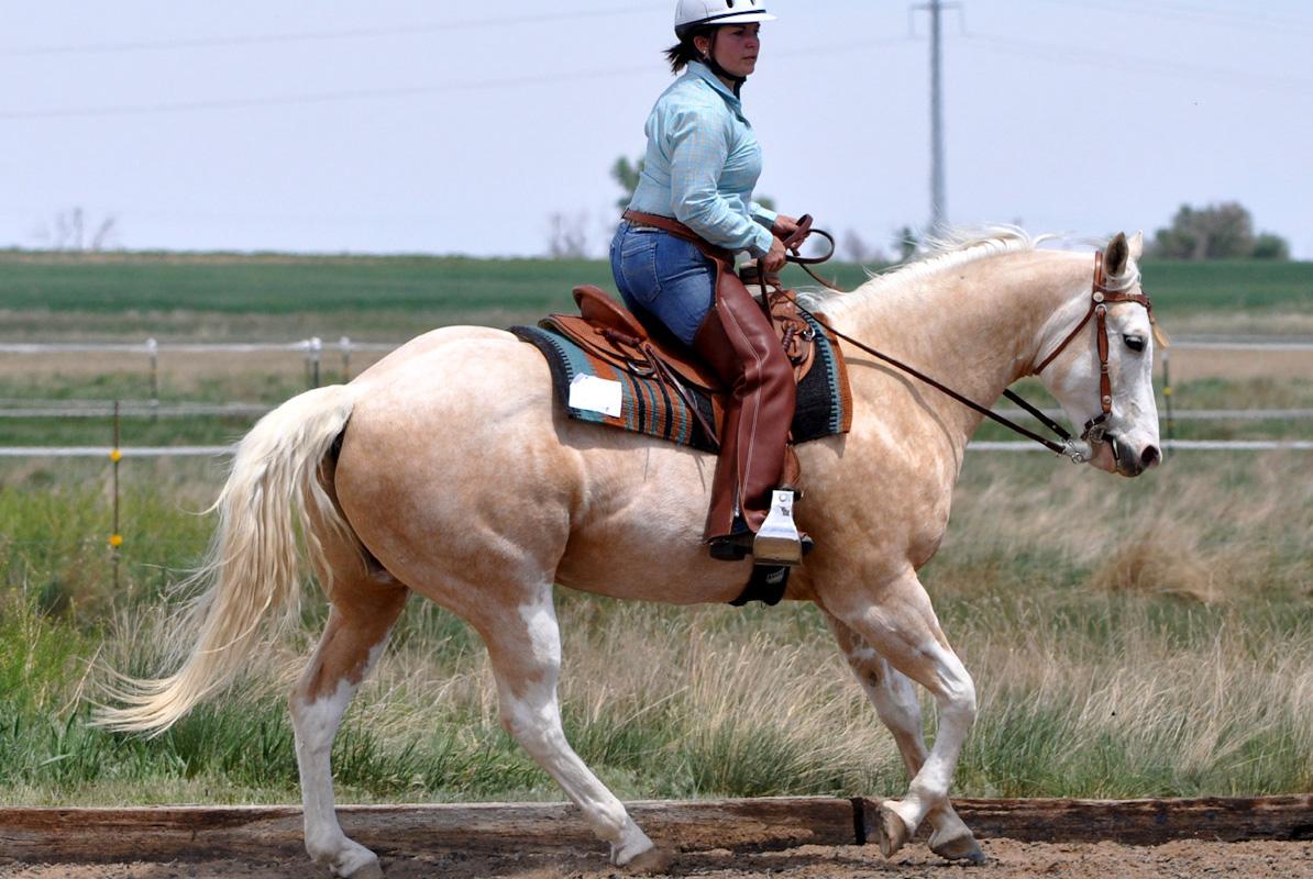 western cowboy dressage cowgirl magazine