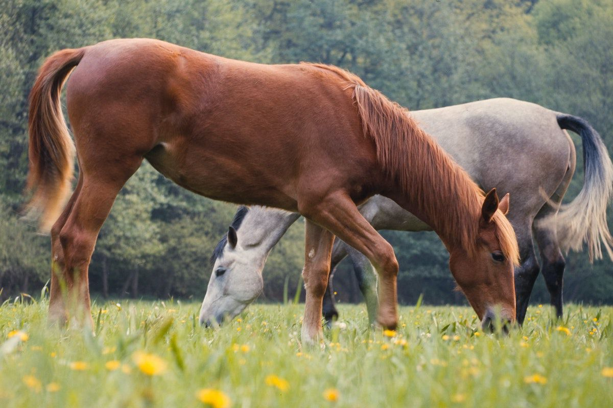 love cowgirl magazine