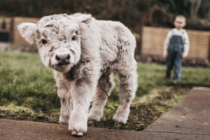 5 Miniature Animals Your Ranch Needs