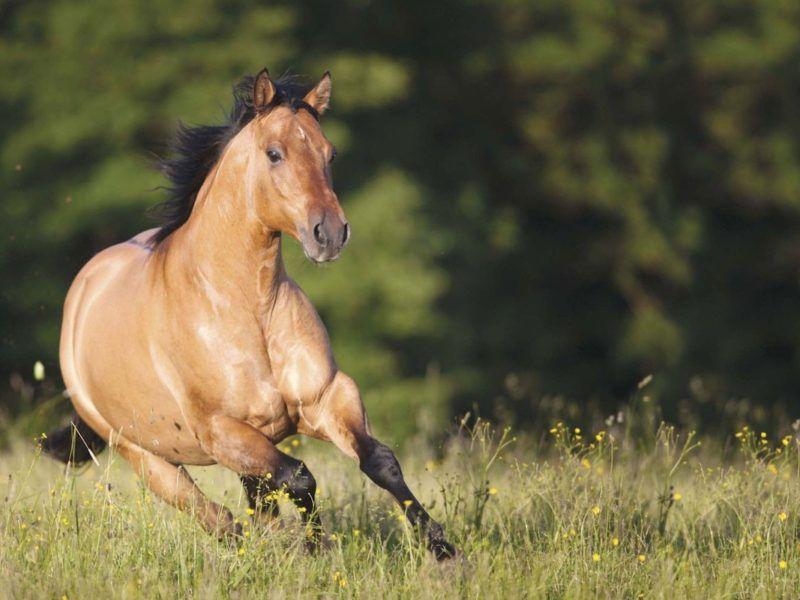 quarter horse cowgirl magazine