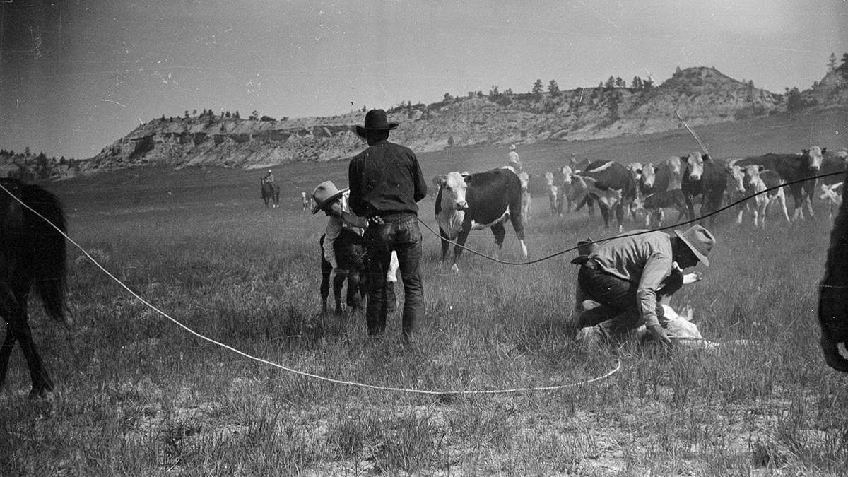 cattle branding cowgirl magazine