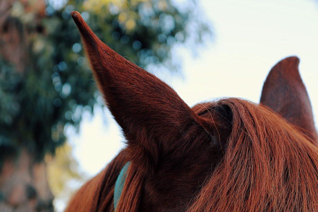 happy horse cowgirl magazine
