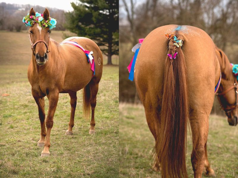 mares foals cowgirl magazine