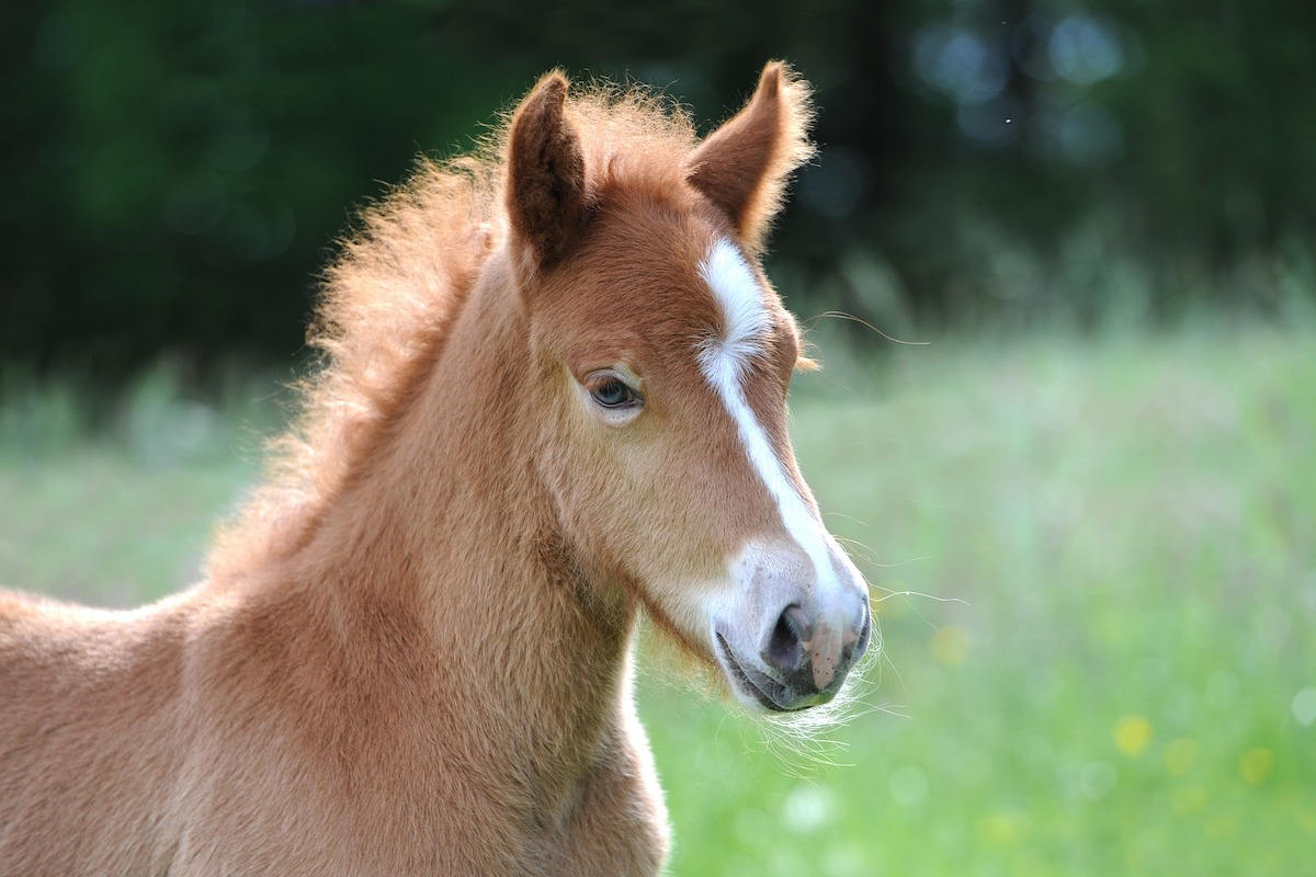 orphaned foal cowgirl magazine