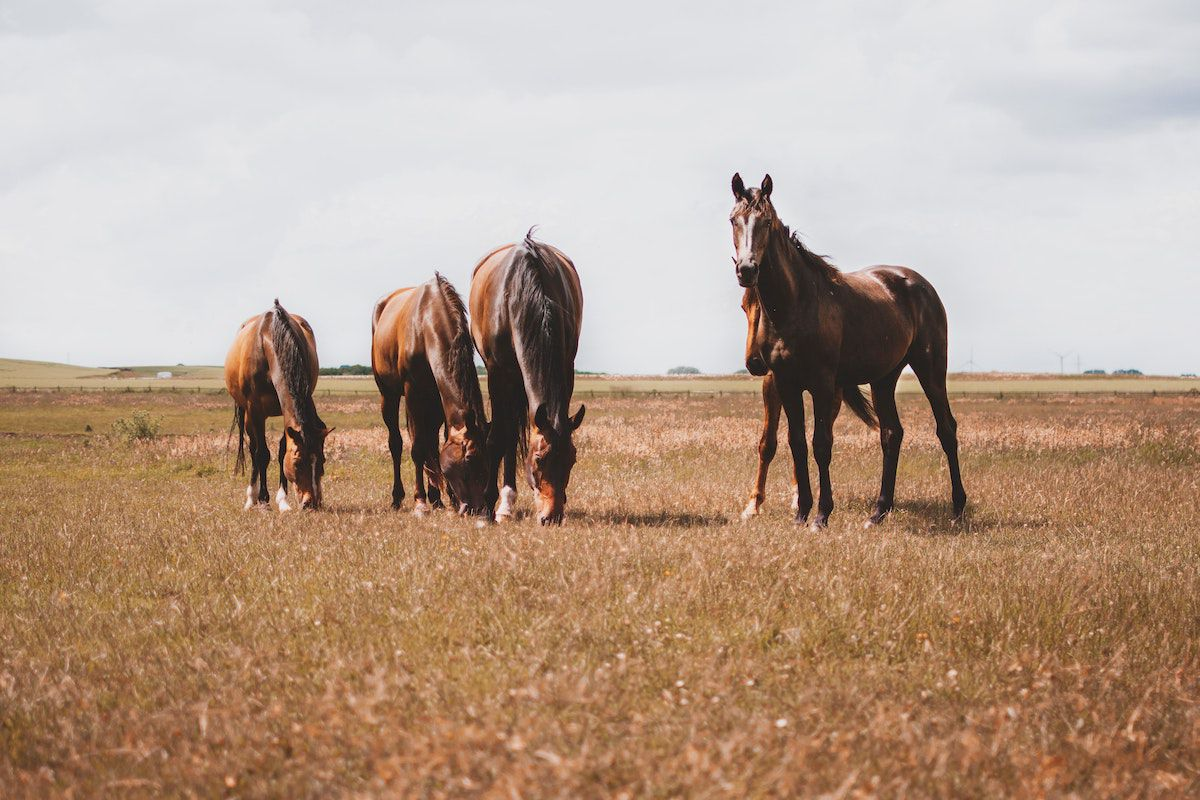 spring grass cowgirl magazine