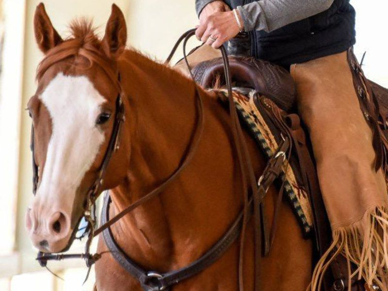 The Great American Ranch and Trail Horse Sale