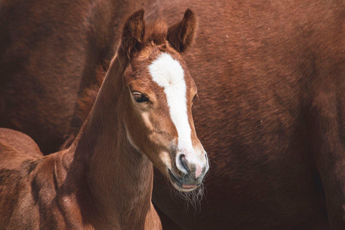foaling camera cowgirl magazine