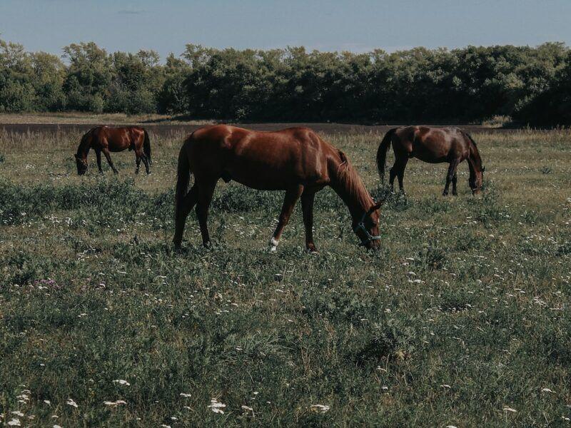 laminitis cowgirl magazine