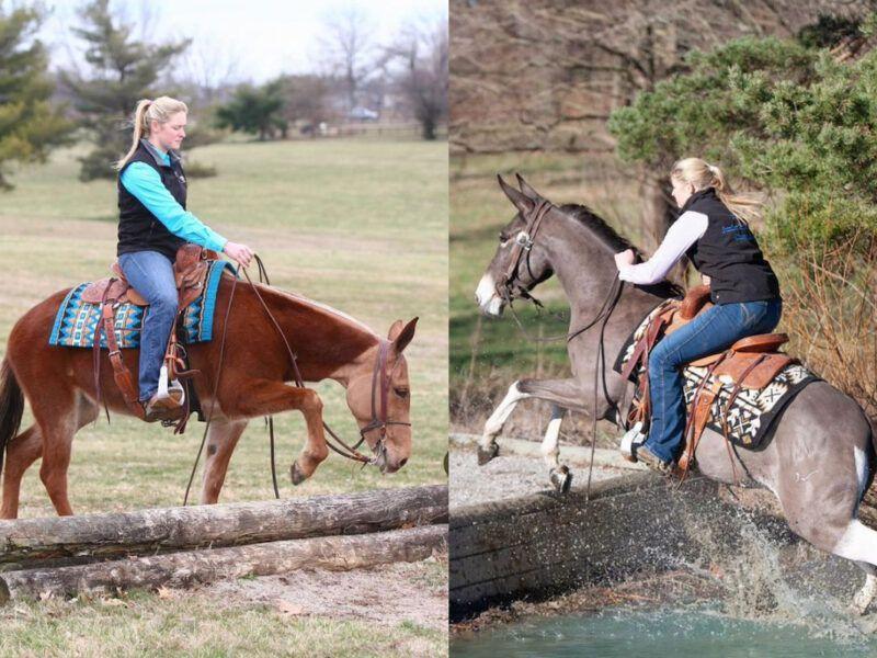 ranch mule cowgirl magazine