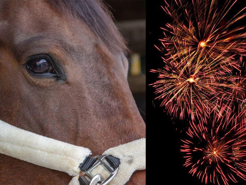 Fear no fireworks cowgirl magazine