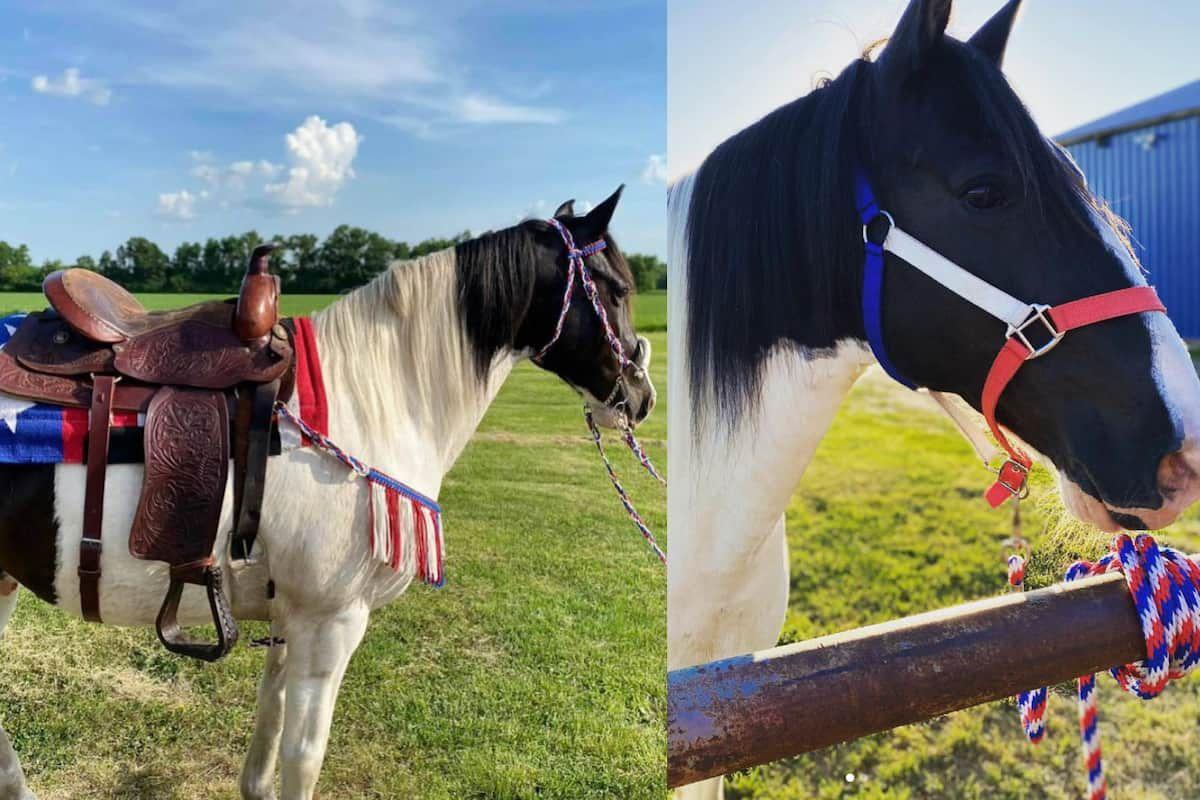 patriotic horse cowgirl magazine