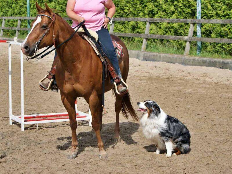 horse and dog trail cowgirl magazine