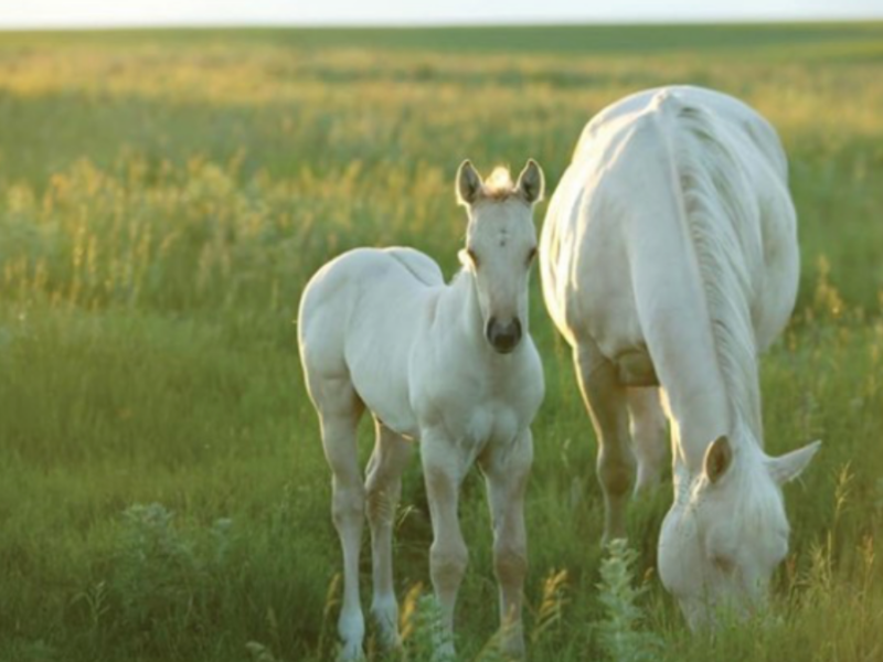 horse-degrees-cowgirl-magazine