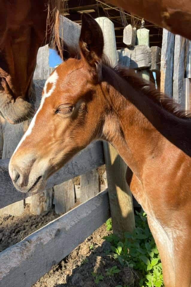 heart foal cowgirl magazine