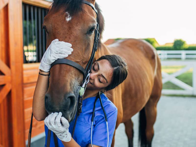 Moving your horse to college cowgirl magazine