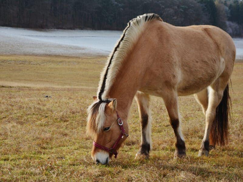fjord cowgirl magazine
