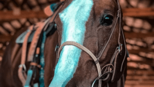 Let's Vacation… Preparing For A Horse Sitter