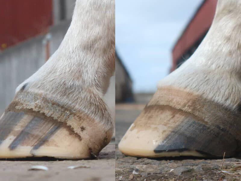 barefoot cowgirl magazine