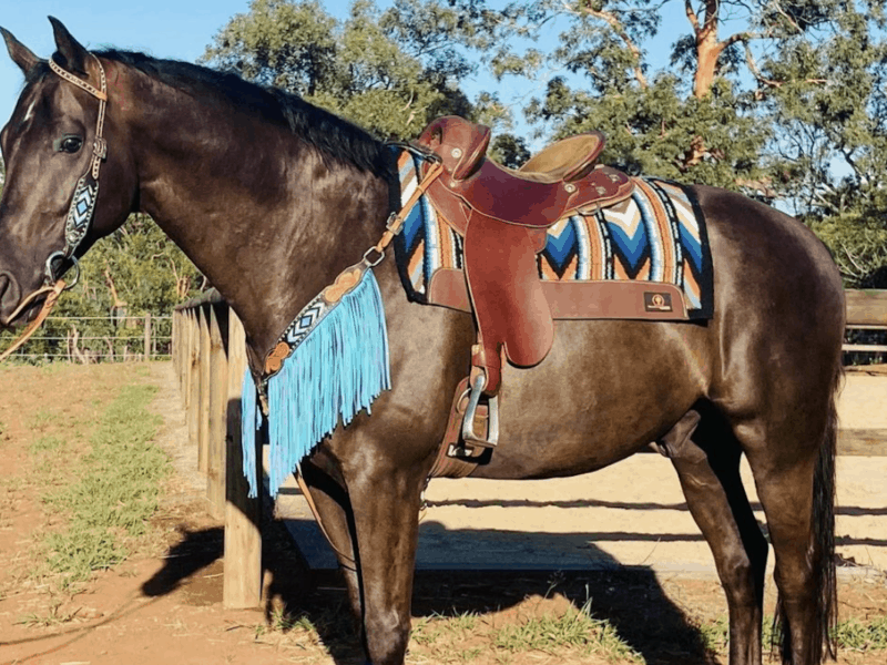 fringe breast collar cowgirl magazine