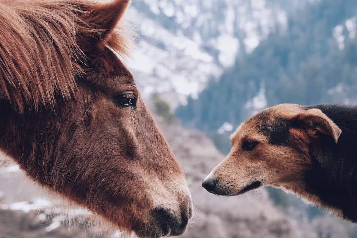dog similar cowgirl magazine