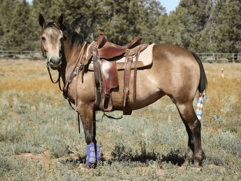 quarter pony cowgirl magazine