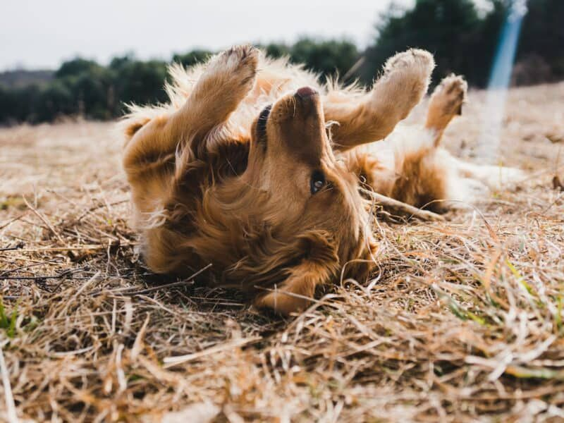 farm dog cowgirl magazine