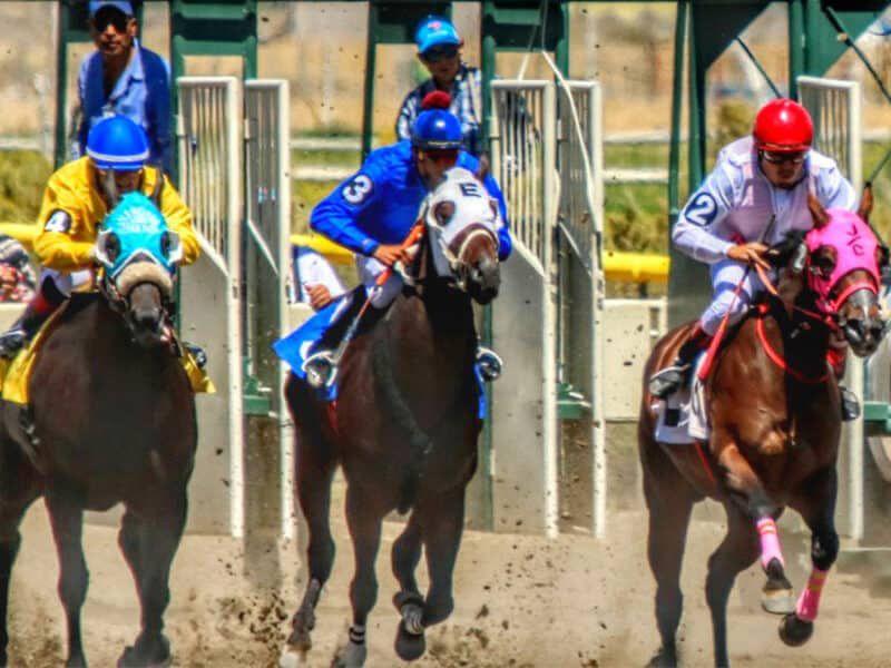 white pine fair and horse racing