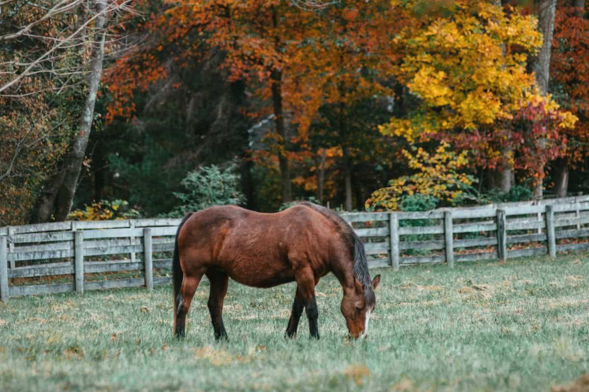 fall cowgirl magazine