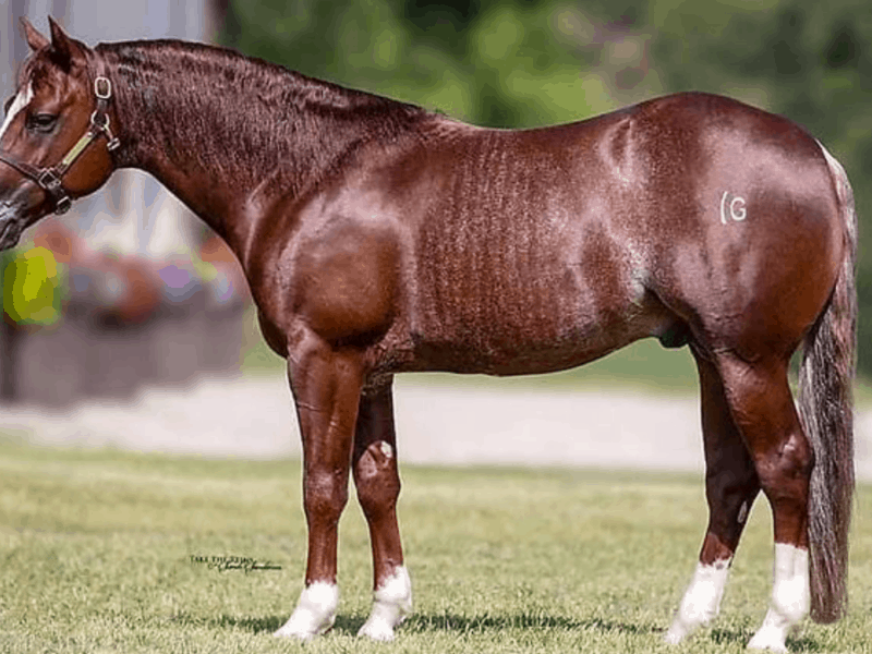 cowgirl-magazine-horse-ad