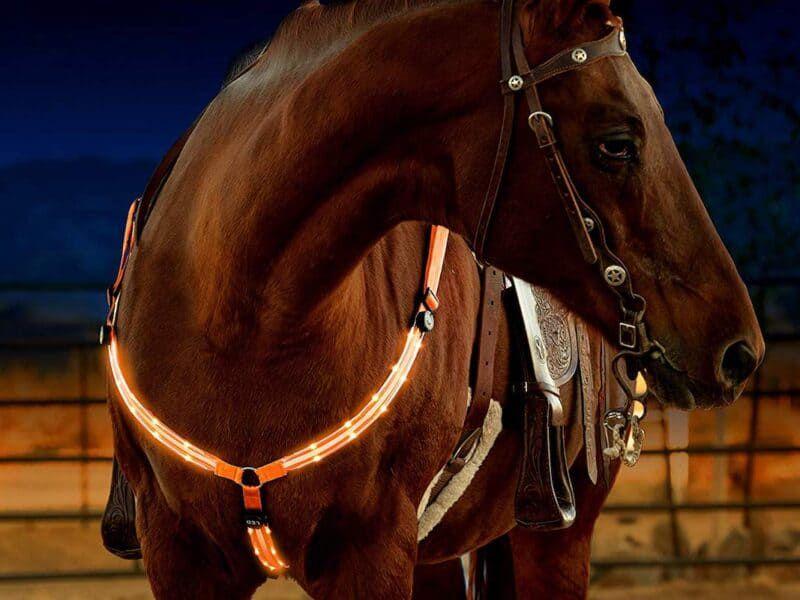 hunting cowgirl magazine